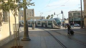 Jerusalem - Olive 4
