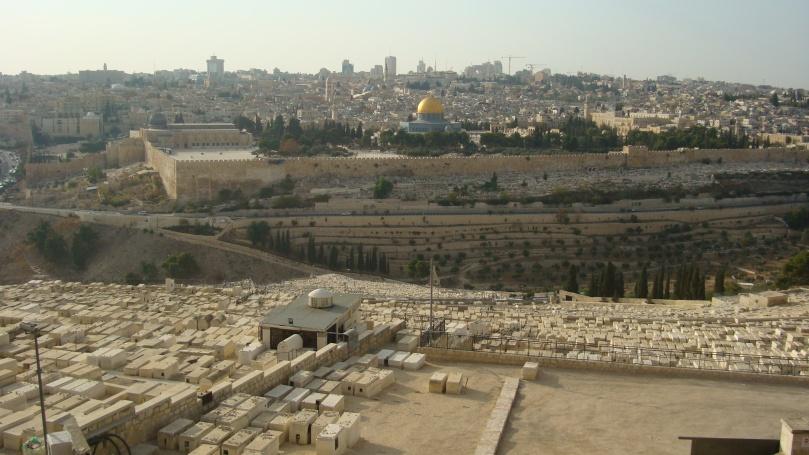 Olive - Jerusalem